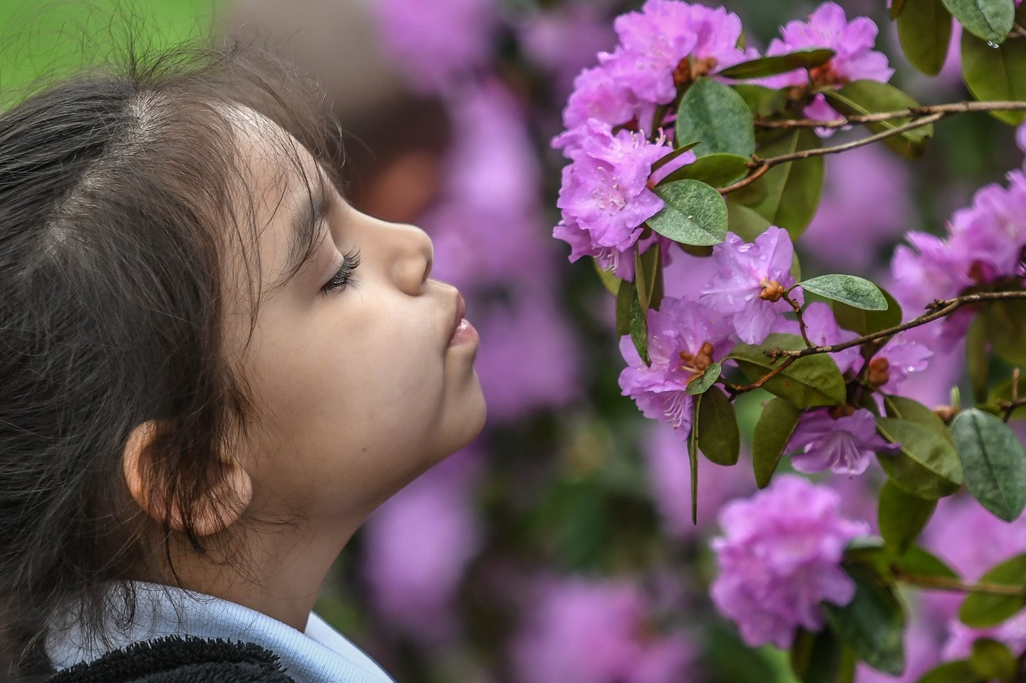 A scholar stops to smell the flowers during a 3 C's field trip